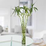 5 Spiral Stick Lucky Bamboo