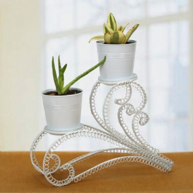 Aloe Vera and Sansevieria Plant