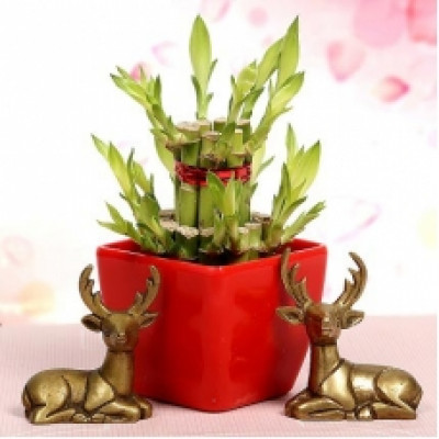 Lucky Bamboo With Deers