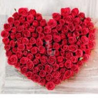 Astounding Valentine Roses
