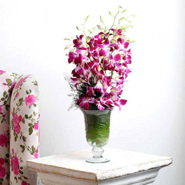 Orchid Aura Standard