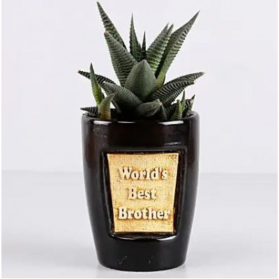 Haworthia Plant For Best Brother